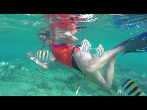 Swarmed by Tropical Fish | Aruba Travel Diary