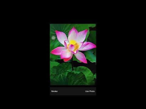 Flower image Recognize iOS app