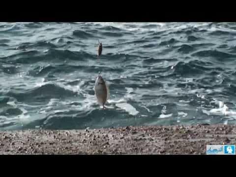 Fishermen -1-   صيادو السمك