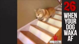 Коли ваша собака Ваку АФ