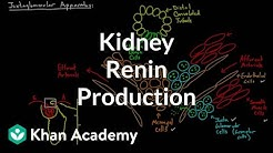 hqdefault - Renin Secretion In The Kidney