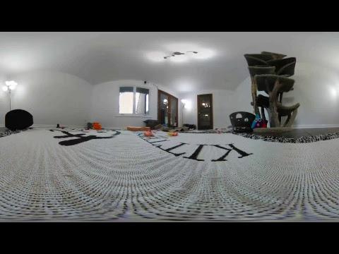New Kitten Room in 360 VR!