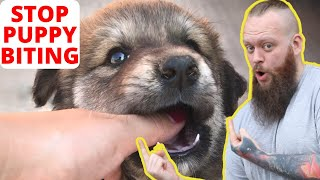 How To STOP Your Puppy From Biting You