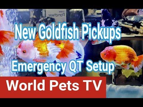 Setting up an Emergency Quarantine Tank! Coast Gem USA New Pickup
