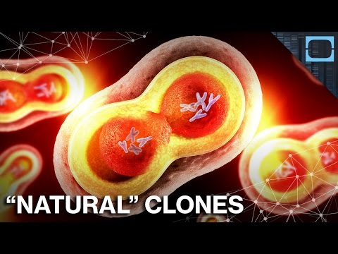 How Cloning Happens Regularly In Nature
