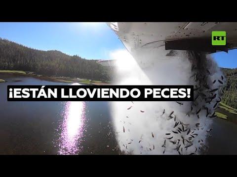 Así se repuebla un lago de difícil acceso: lanzando peces en avioneta