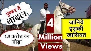 1.5 करोड़ का बादल पुष्कर मेले में बरसा : Millions Price Of Indian Horse In Pushkar Mela Market 2018