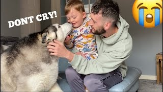 Baby Falls & Husky Does Everything She Can To Make Sure Baby Is Okay! [CUTEST VIDEO!![