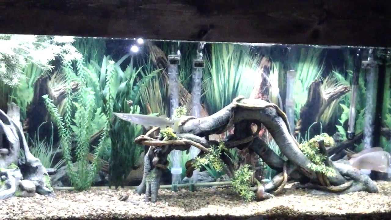 Coolest fish for freshwater aquarium - Coolest Fish For Freshwater Aquarium