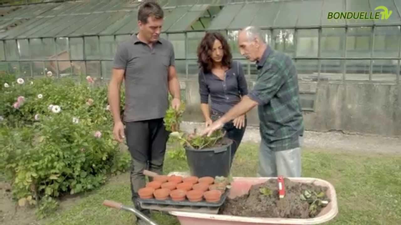 Come ottenere nuove piante di fragole da stolone for Pianta fragole