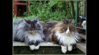 Злые коты передают приветы