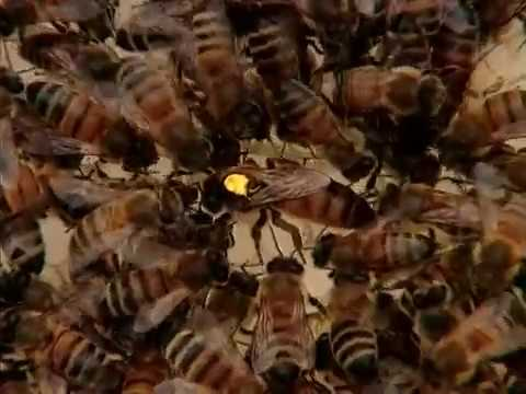 Beekeeping in Northern Climates