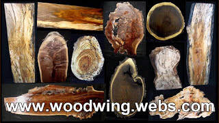 Big Size Tree Trunk Slabs & Slices Wood Log Traders N Suppliers In Mumbai India By Wood Wing