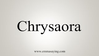 How To Say Chrysaora
