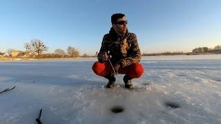 Последний лёд 2021 Псевдорасборы клюют в корчах окуни из небольшого озере вешаются на балансир