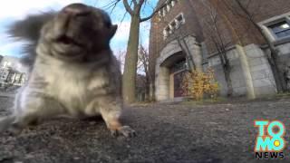 Wiewiórka kradnie kamerę GoPro i wskakuje z nią na drzewo.