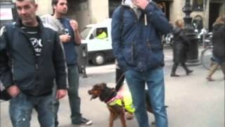 Animals sense sostre 3 tombs Barcelona 2014