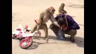 MONKEYS 🐒 Funny Monkey Videos 2018