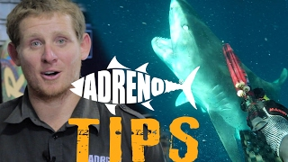 Spearfishing with Sharks (Tigers, White Pointers, Bullsharks)    ADRENO