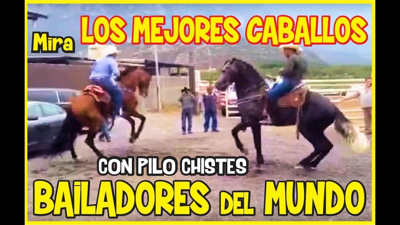 Los mejores caballos bailadores del mundo Pilo Chistes Greatest Dance Horses on the planet