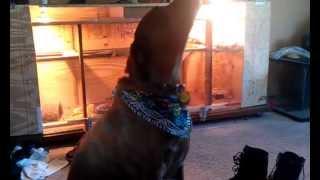 Dog uses inside voice