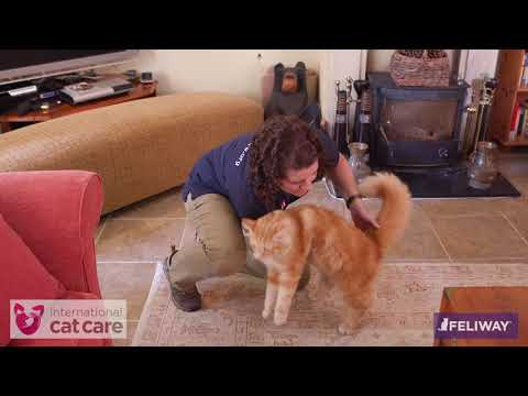 How to touch and stroke a cat