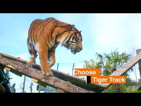 Edinburgh Zoo does Trainspotting
