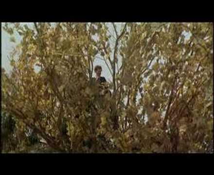 Federico Fellini - Amarcord