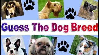 Guess these DOG BREEDS - Animal QUIZ - Can You Name These 20 Dog Breeds? Pets game - Blind TEST #1