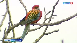 В севастопольском дворе поселился попугай из Австралии