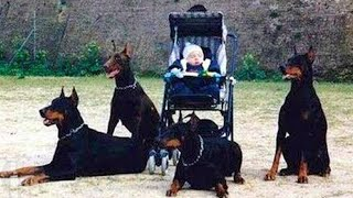 10 Dogs That Are Stronger Than An Army