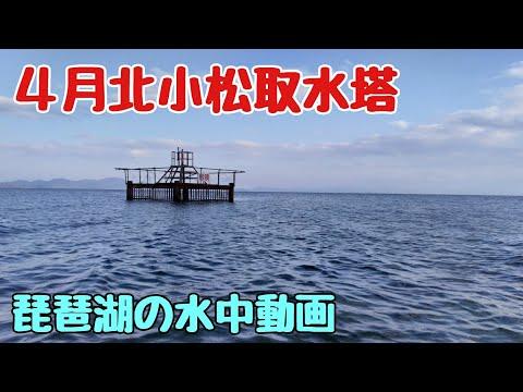 #水中動画 #琵琶湖 #北小松 4月の北小松取水塔