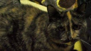 Приют для котиков город Киев