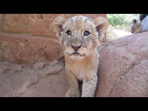 Top 5 Cutest Baby Animals