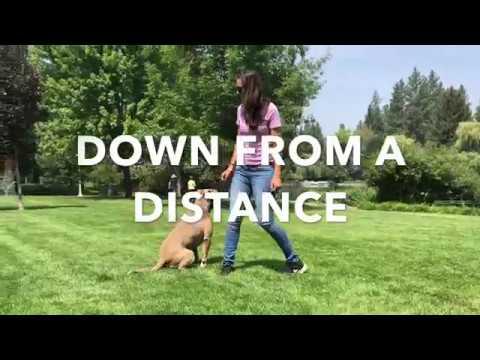 UTAH - Pitbull Dog Training Oregon