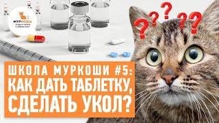 """Как дать кошке таблетку? Как сделать укол? - Школа """"Муркоши"""" #5"""