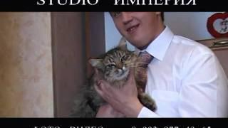 видео свадьба в курске- говорящий кот