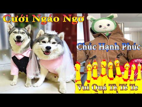 Thú Cưng TV | Dương KC Pets | Ngáo Và Ngơ #14 | chó thông minh vui nhộn | funny cute smart dog