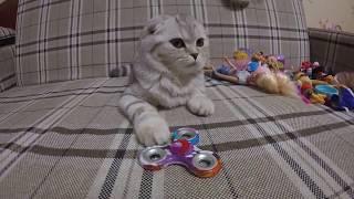 😻Реакция Котенка на Спиннер 🐱 Игрушки для котов и кошек
