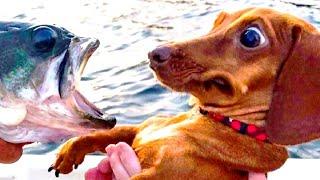 ПРИКОЛЫ С ЖИВОТНЫМИ Смешные Животные Собаки Смешные Коты Приколы с котами Забавные Животные 100