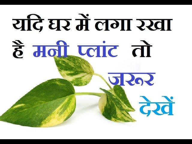 Vastu Tips For Money Plant II ??? ?????? ?? ??? ?????? ?????