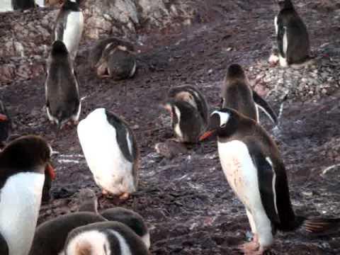 Fin del mundo - czas pingwinów | Doovi