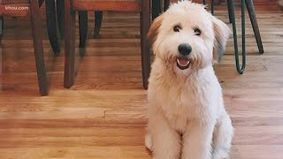 Family pet dies while in care of dog walker