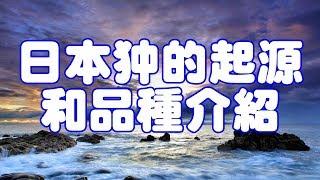 日本狆的祖先是中國犬,與八哥犬,北京犬同屬西藏獵鷸犬子孫,其悠久的...