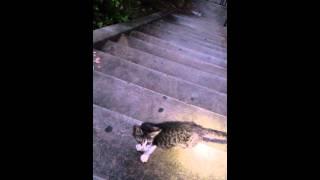 本当の吉原地域猫。暴力団大量遺棄160匹、虐待骨折