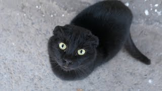Download Video Black cat only thinks about hot food MP3 3GP MP4