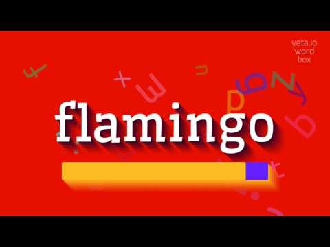 """How to say """"flamingo""""! (High Quality Voices)"""