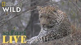 Safari Live - Day 205   Nat Geo Wild