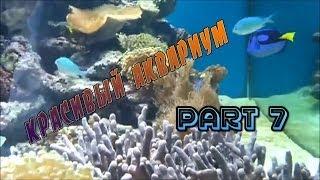 Красивый аквариум №7 / Beautiful aquarium number 7(, 2014-05-01T11:36:16.000Z)