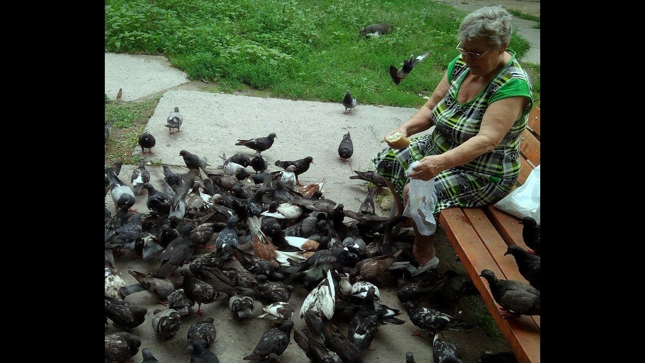 картинки старушка кормит голубей линейке только